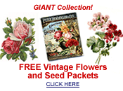 free vintage flowers and seed packets