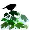 clip_art_bird