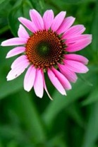 1031841_bright_pink_flower_2